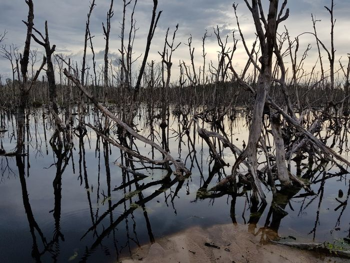 Dead mangrove. Water Lake Silhouette Reflection Tree Sky Landscape Marsh Swamp Flood Wetland Standing Water Calm Reflection Lake Wilted Plant Dead Plant Dried Plant Dead Tree Salt Lake Dry Fallen Tree