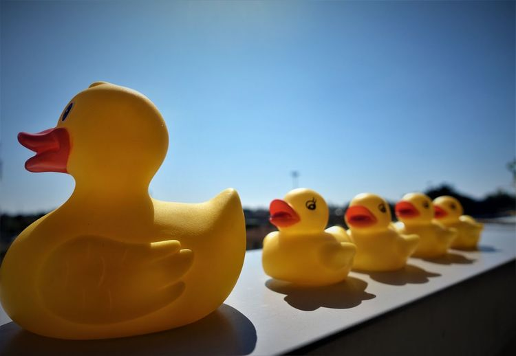 Close-Up Of Rubber Ducks On Retaining Wall