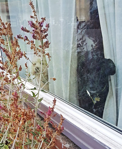 Beautiful Boys! Beauty In Nature Dogs Dogs In The Window House Window No People Peaking Through Window