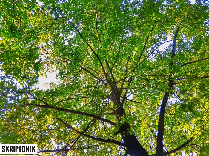 Xperiaphotography Growth Tree Low Angle View Nature Branch Green Color Day Outdoors Beauty In Nature Tranquility No People Sky