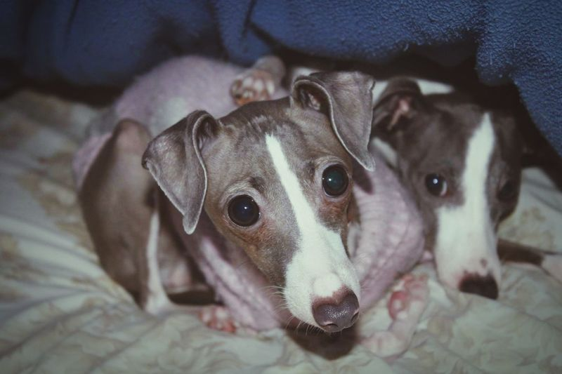 They are so cute ☺️ Lorenzosofia Dog Pets Cute Pets