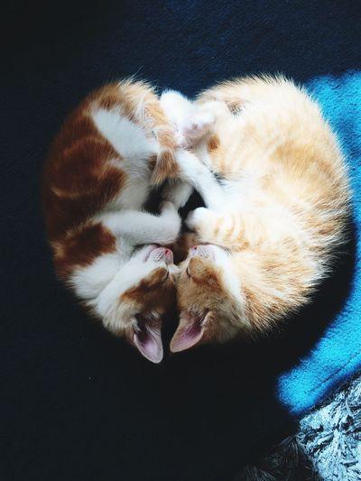 Directly Above Shot Of Kitten Sleeping On Rug