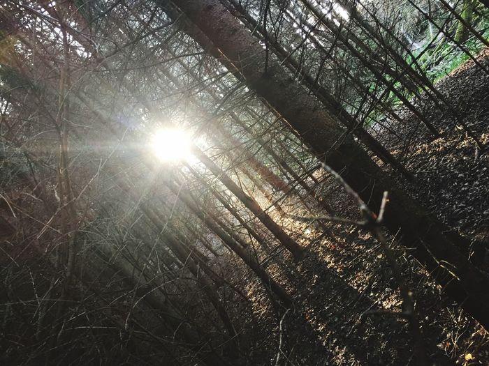 Sunlight Sun