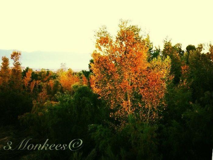 Autumn Colors In Desert