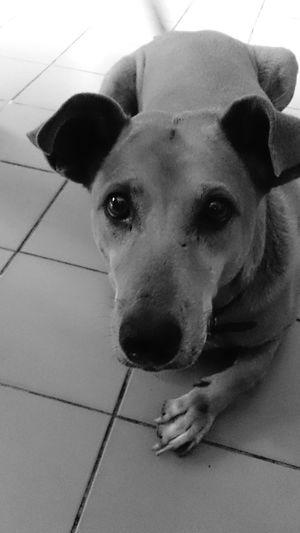 Lookintomyeyes Dog Streetphotography ThaiDog Laydown Please Waiting Hope