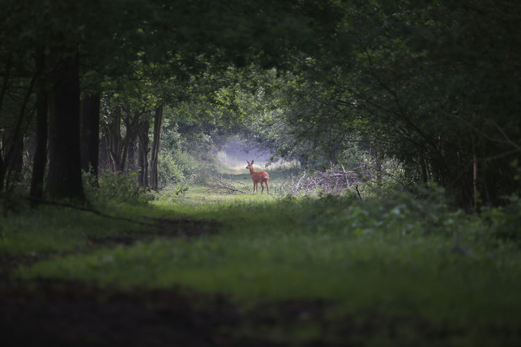 Animal Deer Forrest Photography Light And Shadow Tunnel Vision Wildlife & Nature