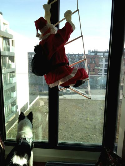 Waiting For Santa Santa Claus Is Coming To Town  Border Collie Christmas Decoration Sunny Christmas Perros❤ Puppy Navidad Built Structure Through The Glass Esperando A Papa Noel Traveling Home For The Holidays