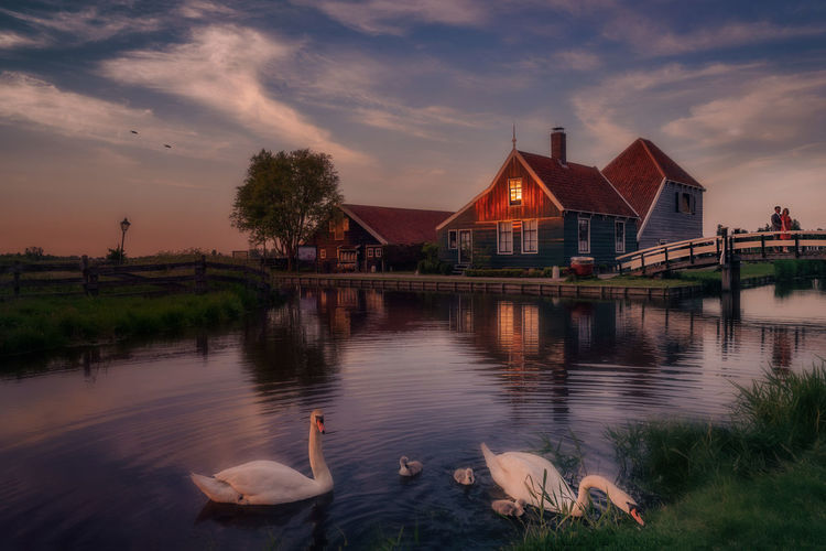 Remo SCarfo Dutch Holland Swans ❤ Architecture Built Structure Water Building Exterior Animal Themes Animal Bird Animals In The Wild Sky Animal Wildlife Vertebrate Lake Swan Swimming Nature Cloud - Sky Group Of Animals No People Building Love Clouds Reflection