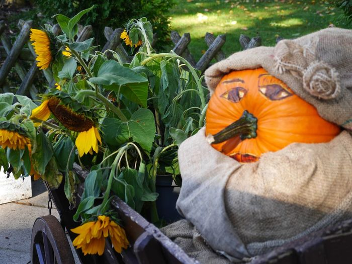traditional creativity Autumn Creativity Eye4photography  Ideas October Outdoors Pumpkin Seasonal Decorations Stillife Sunflowers Tadaa Community