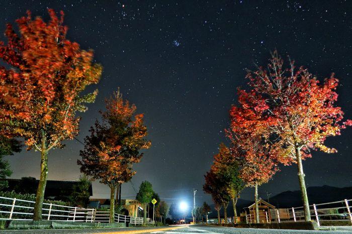 朝チャリ 早朝 並木道 サイクリング モミジバフウ アメリカフウ 木 Avenue Cycling Tree 紅葉 Tree Night 秋 ソラ Galaxy Beauty In Nature Autumn Sky 日の出前 星空 Starry Sky Astronomy Star - Space 秋空 空