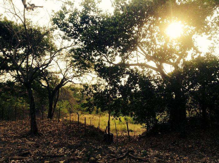 PERFEC  Landscape Tree Paradise