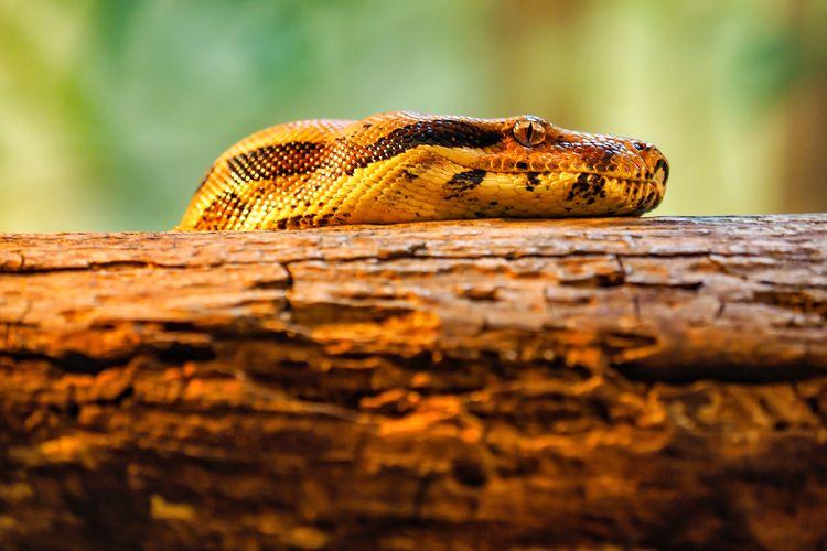 Snake EyeEm
