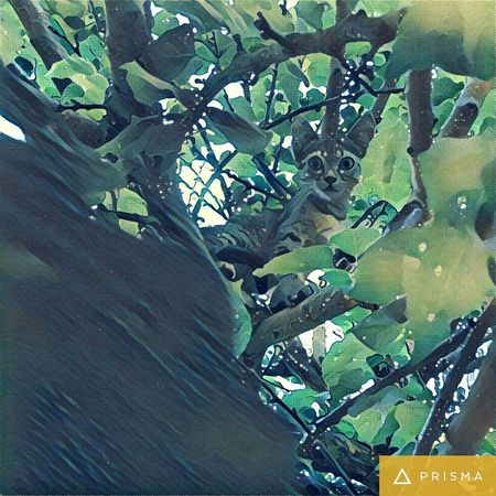 Cats Nature Mobilephotography Prismacolor Trees Mobile Photography LoveNature