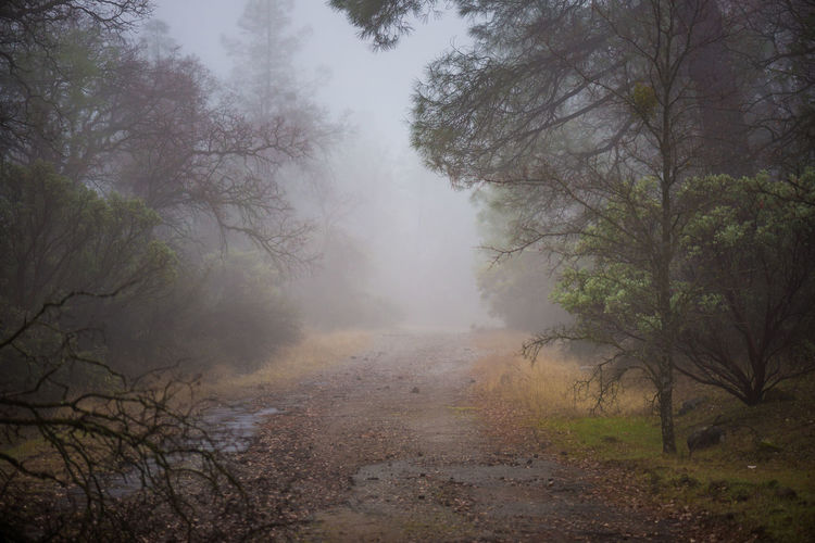 Scenic view of foggy forest