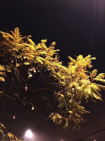 Moonlight Growth Tree Nature Beauty In Nature Night Branch Leaf