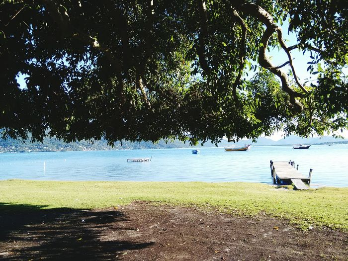 Lagoa da Conceição Florianópolis - SC-Brasil Water Tree Beach Nature Sea Outdoors Beauty In Nature Day Sand Tranquility Scenics Sky Real People Vacations Full Length People Adult Only Men