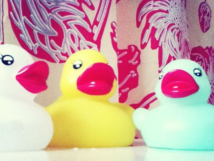 The Duck Family.