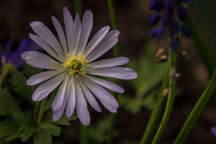 The Week On Eyem Showcase: March Flower LongwoodGardens Flowers Gardens