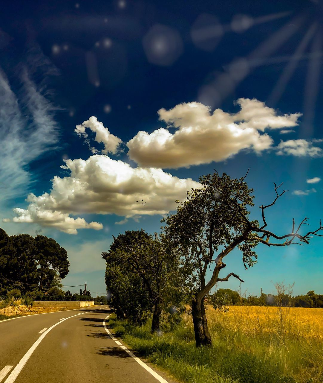 sky, plant, road, cloud - sky, tree, direction, transportation, the way forward, nature, field, landscape, no people, land, beauty in nature, environment, tranquility, tranquil scene, scenics - nature, symbol, sign, diminishing perspective, outdoors, dividing line, long
