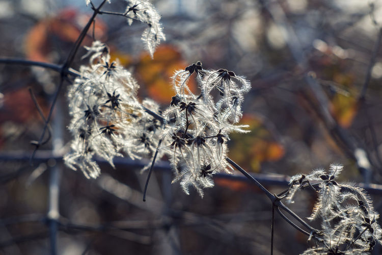 Beauty In Nature Close-up Cold Temperature Day Dried Plant Focus On Foreground Fragility Frozen Nature No People Outdoors Plant Snow Winter