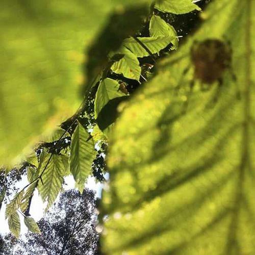 Nature Leaf