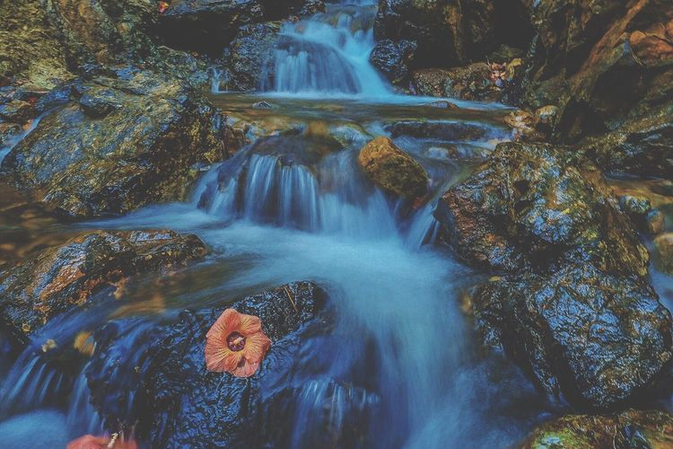 Live For The Story Waterfall Flower In The Waterfall Drifted Flower Eyemphilippines Live For The Story The Great Outdoors - 2017 EyeEm Awards