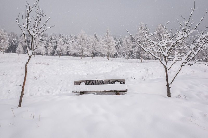 Bench Snow ❄ Trees Winter Winterscapes Wintertime Cold Days Cold Temperature Cold Winter ❄⛄ Landscape Nature Outdoors Snow Snowfall Snowing Snowy Tranquility White Winter Winter Trees Winter Wonderland Wintertime ⛄ Shades Of Winter