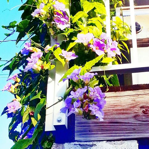 Flower Growth No People Day Plant Nature Multi Colored Sunlight Outdoors Fragility Architecture Beauty In Nature Close-up Freshness Tranquil Scene Home Sweet Home Ramrod Key Florida Green Color Growth Beauty In Nature Freshness Flower Head Purple