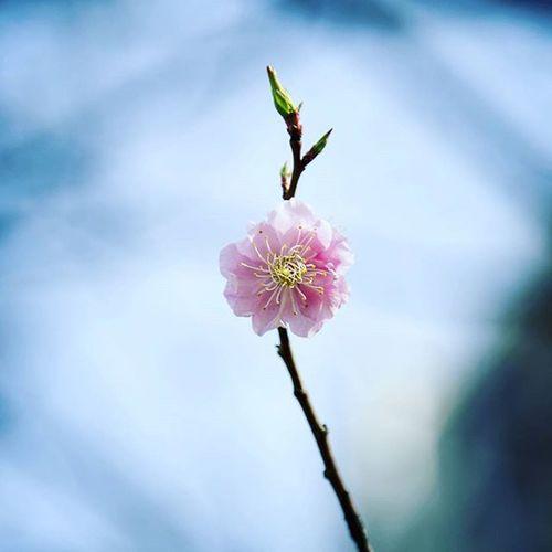 동네 꽃 너에게 주고싶은 꽃 사진스타그램 사진 꽃 6D 24105mm 봄 봄꽃 좋아요 봄내음 봄바람 봄봄봄 생각많음