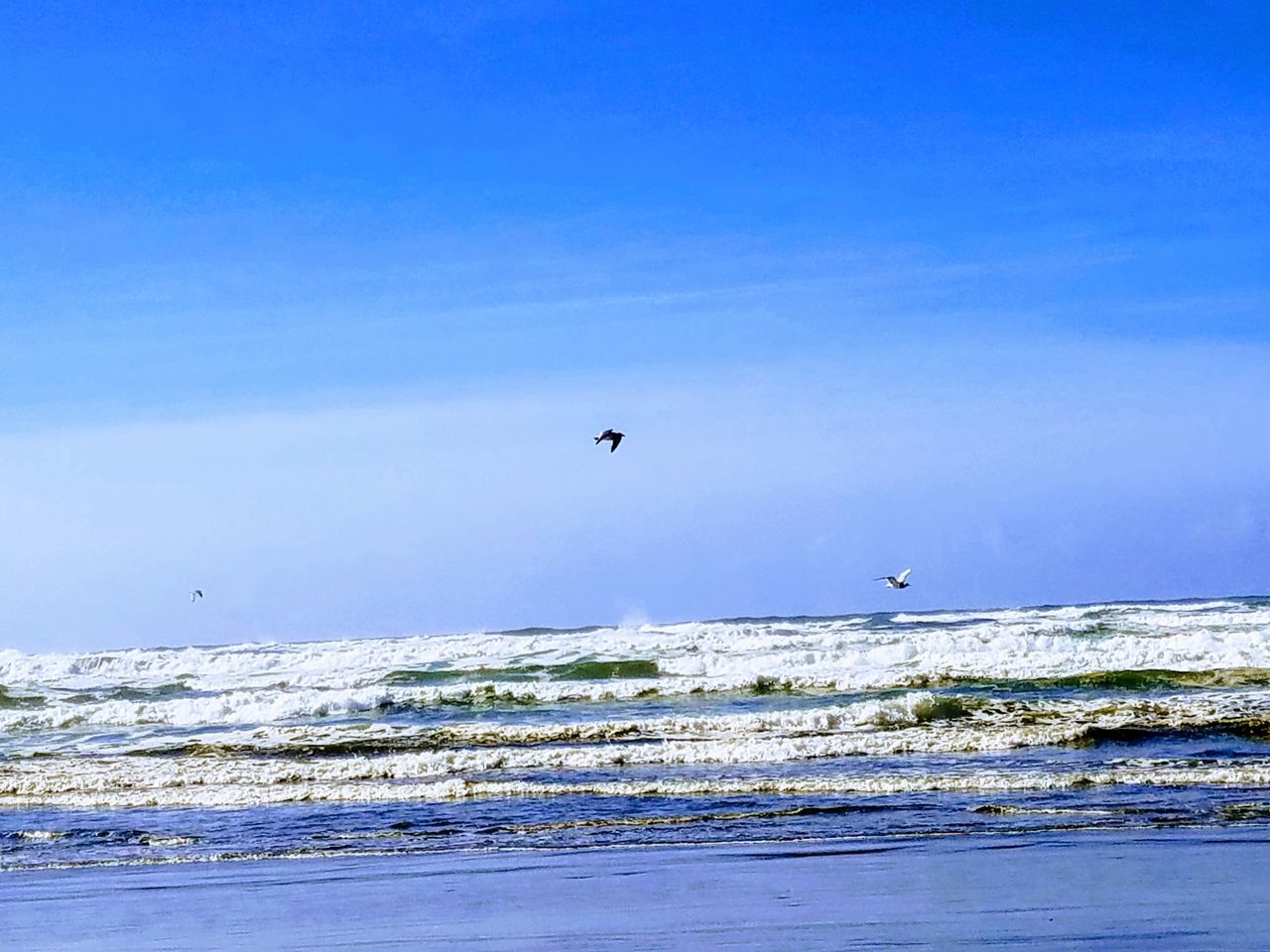 sea, water, sky, scenics - nature, beauty in nature, blue, animal themes, flying, land, animal, vertebrate, motion, wave, horizon over water, bird, day, beach, animal wildlife, animals in the wild, no people, outdoors