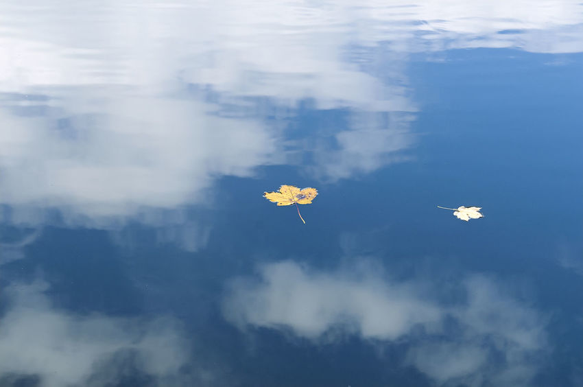 Hegelesweiher_2018_10_11315 Leafs Mirrored Blue Blue Background Cloud - Sky Day Lake Leaf In The Water Nature No People Outdoors Sky Tranquility Two Points Water White White Color Yellow Leaf