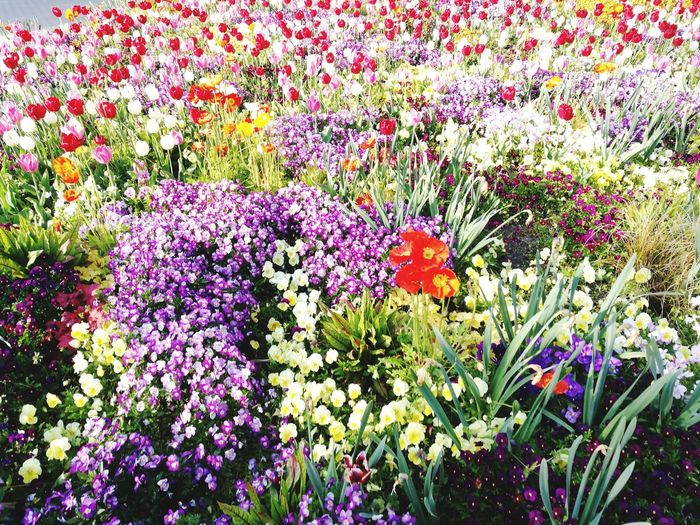 Flower Flower Beauty In Nature Growth Nature Plant No People Outdoors Field Multi Colored Blooming Blütenpracht Blütenzauber