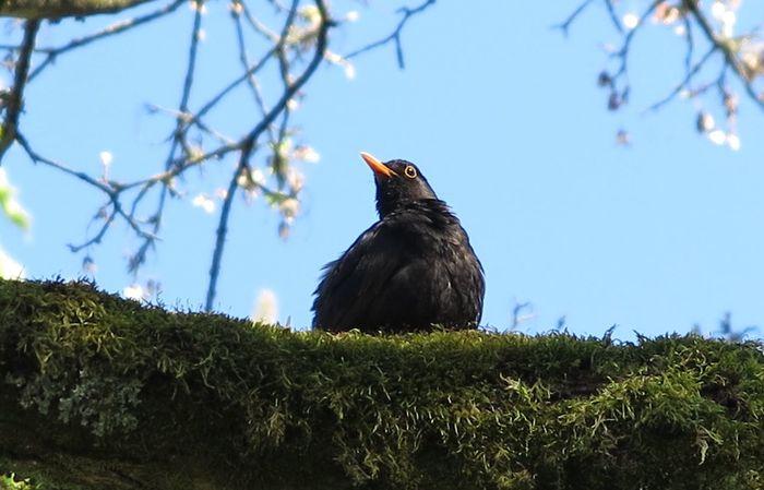 Naturelover Birds_collection On A Tree Details Of Nature Bird Photographie Blackbirds