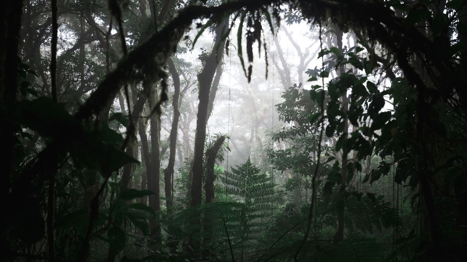 Santa Elena Nebula Forest, Costa Rica. Green Tranquility Beauty In Nature Branch Day Fog Foggy Foggy Day Foggy Landscape Forest Growth Jungle Landscape Leaf Moody Natural Framing Nature No People Outdoors Plant Rainforest Scenics Tranquil Scene Tree Tree Trunk