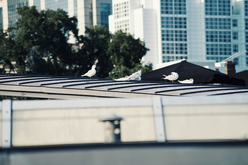 White birds on a roof in the city