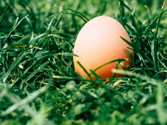 Close-up of easter egg on grassy field
