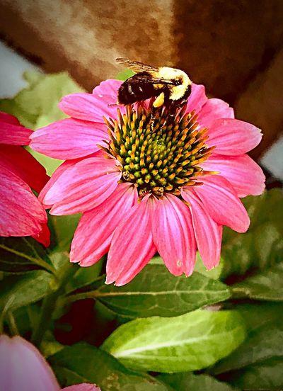 Beauty&the Bee