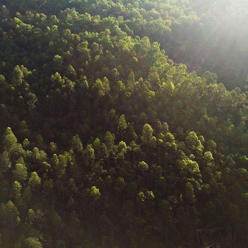 Sunshine on trees Landscape Zhongshan Guangdong China