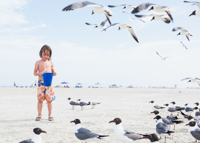Boy with bucket standing by seagulls at beach