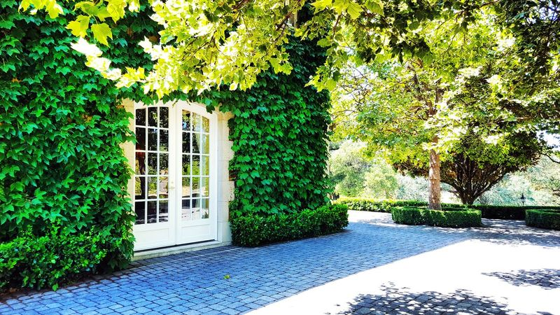 Day Tree Outdoors Green Color Ivy Plant No People Built Structure Growth Nature Architecture Building Exterior Beauty In Nature