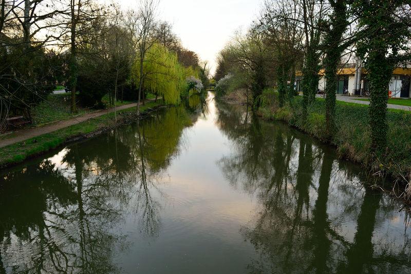 Beauty In Nature Nature Reflection River Tree Békéscsaba Békésmegye Hungary