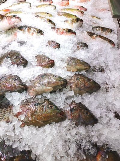 Frozen fish Frsh Fish Frsh Healthy Fresh Healthy Lifestyle Soshi Sashimi Dish Close-up Fish Head Headshot Supermarket Ice Backgrounds Full Frame Close-up Fish Market Fishes Fishing Industry Fish Catch Of Fish Commercial Fishing Net Fishing Net Dead Animal