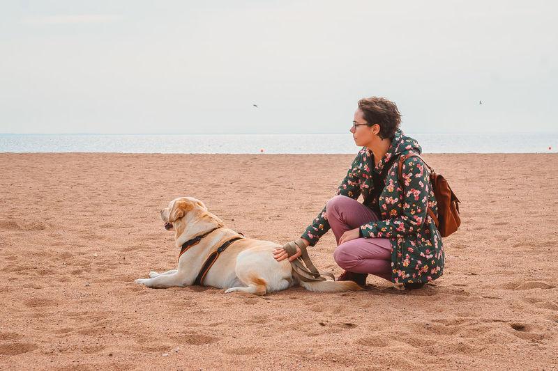 A girl strokes a labrador retriever on a sandy beach in autumn. relax with a dog at the sea