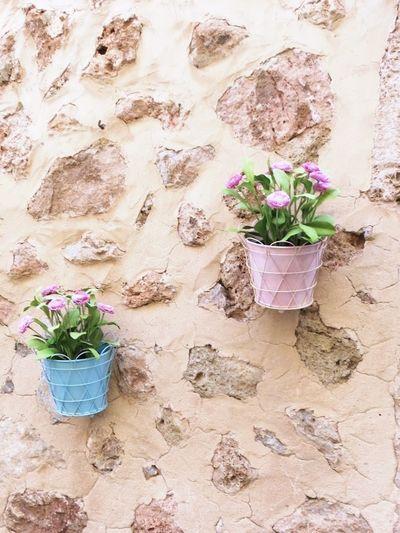Housewall Flowerpots Flower Flowers Nice Place City Urban Landscape Outdoors No People EyeEmNewHere
