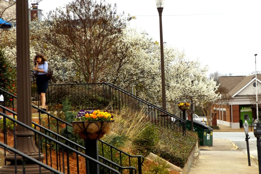 'Flower basket' Spring Is Coming  Springtime Spring Flowers Spring Blossoms College Town Street Photo Early Spring Auburn, Alabama City City Life