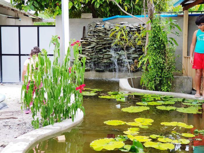 pond Wayerfalls