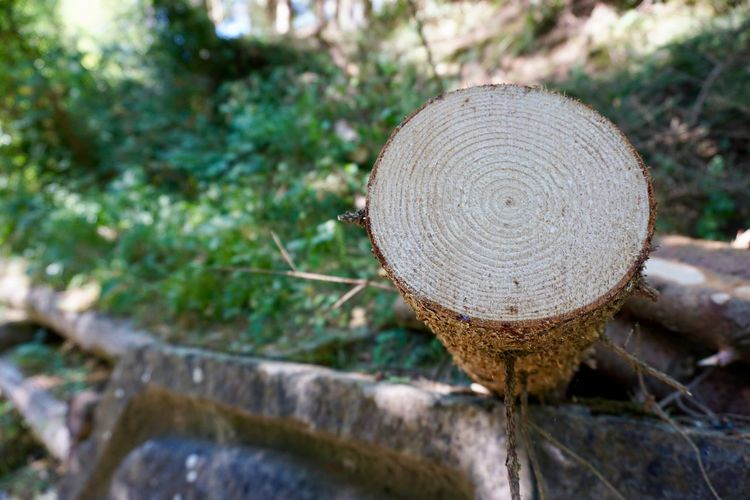 Fir tree trunk Close-up Day Growth Log Mushroom Nature No People Outdoors Tree Tree Ring Wood - Material