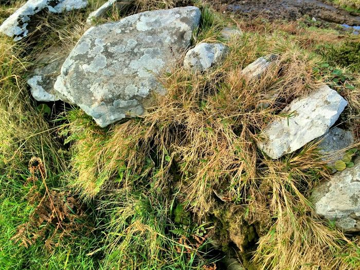 Roadside bank Grassy Bank Grasses Ferns Dried Grass Stones Litchen Sunlight High Angle View Nature No People Outdoors Close-up Full Frame Day Backgrounds Beauty In Nature Mizen Peninsula West Cork Wildatlanticway Ireland