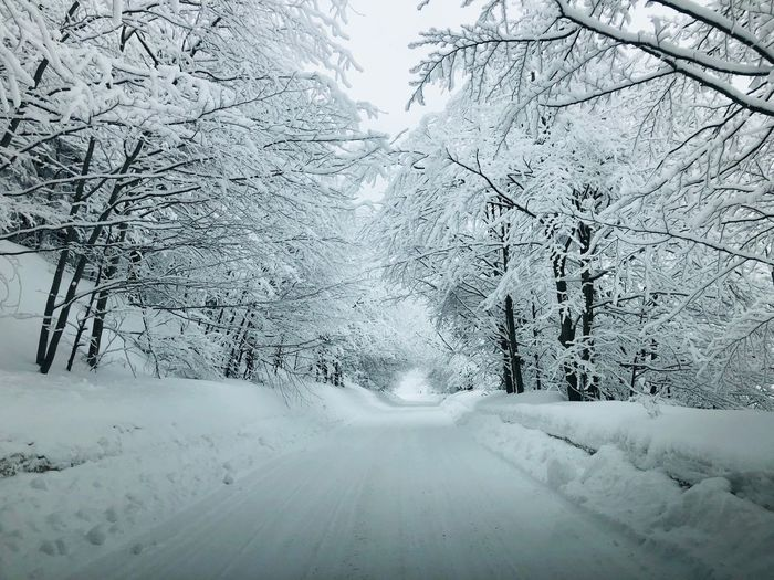 Road covered in snow surrounded by trees covered in snow Travel Idyllic Landscape Environment Non-urban Scene No People Outdoors WoodLand Woods Forest Road Cold Temperature Snow Winter Tree Nature Day No People Direction Transportation Diminishing Perspective The Way Forward Beauty In Nature Tranquility Tranquil Scene Bare Tree White Color Scenics - Nature Frozen Covering
