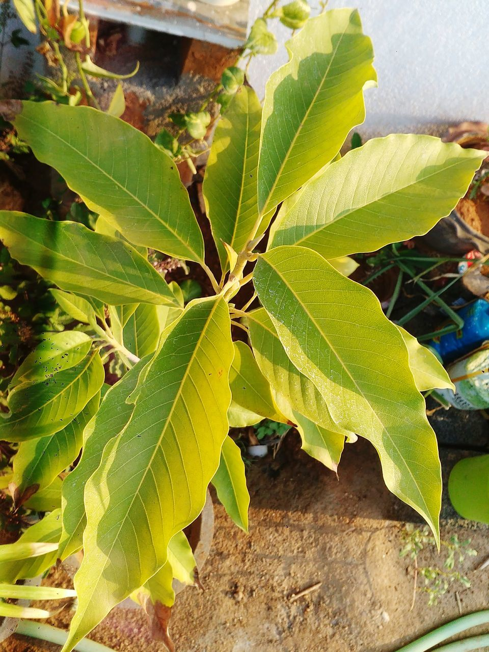 leaf, growth, green color, nature, day, plant, outdoors, freshness, no people, close-up, beauty in nature, fragility